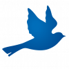 oiseau_BETHEL
